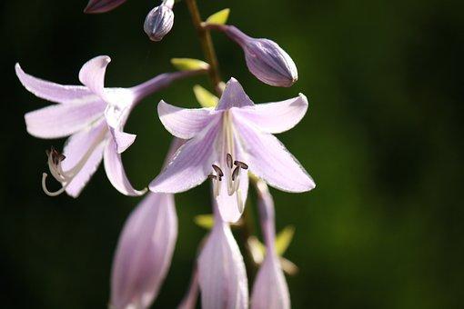 Flowers, Sunlight, Purple, Floral, Flower Background