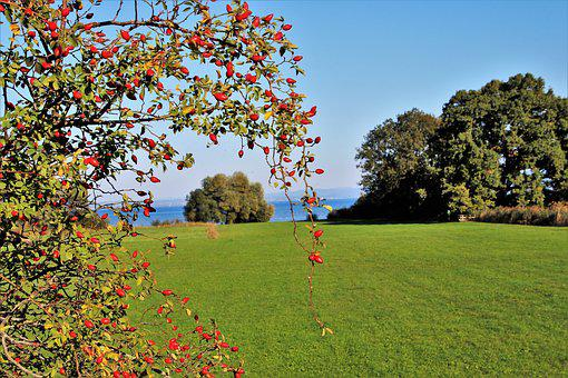 Rose, Wild, Fruit, View, Plant, Lake, The Prospect Of