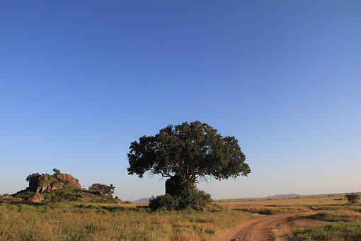 Landscape, Tree, Nature, Still, Safari, Vacations