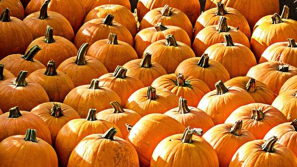 Pumpkins, Fruit, Color, Harvest, Vegetables, Food