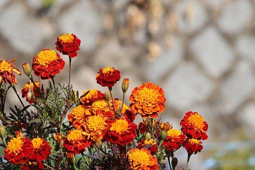 Wildflower, Autumn, Nature, Plants, Flowers