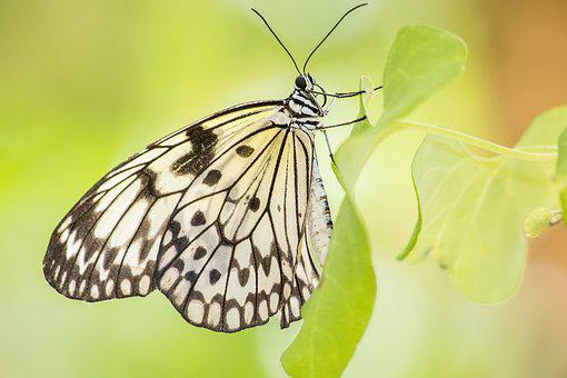 Butterfly, Yellow, Bug, Nature, Wing, Garden