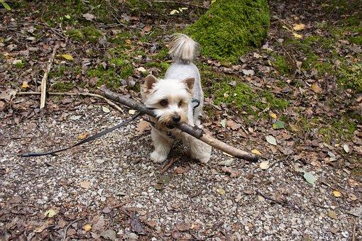 Dog, Pet, Young, Cute, Enjoy, Playful, Small, Friend