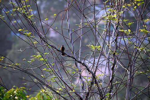 Bird, Tree, Branch, Nature, Animal, Landscape, Beak