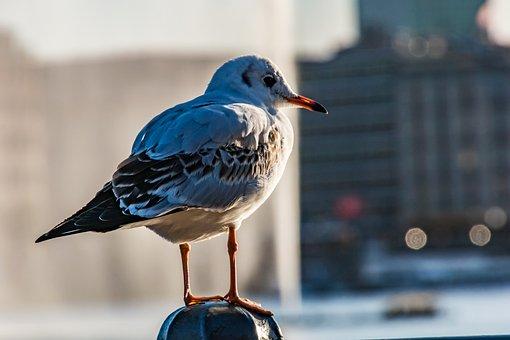 Seagull, Hamburg, Bird, Port, Nature, Animal, Water