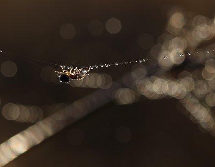 Spider, Dew, Wet, Drops, Spider Web, Acrobat, Bokeh