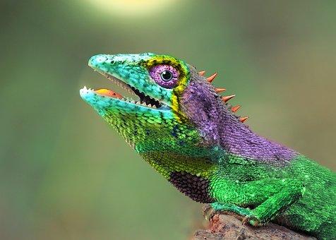 Chameleon, Animal, Hirba, Colorful, Color, Nature