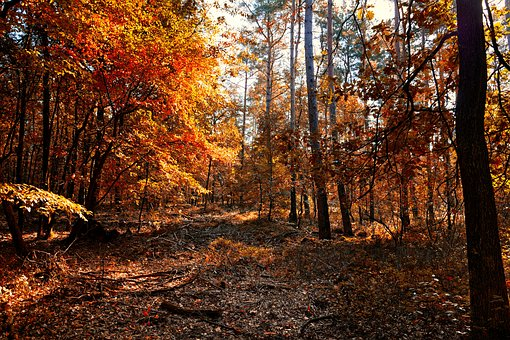 Autumn, Leaves, Fall Colors, Colorful, Forest