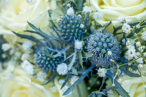 Thistle, Blue, Flower, Nature, Plant, Blossom, Bloom