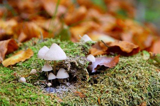 Mushrooms, Forest, Autumn, Moss, Forest Mushroom