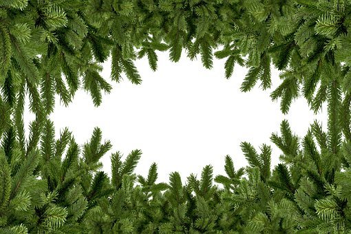 Holly, Mockup, Fir Tree, Frame, Branches