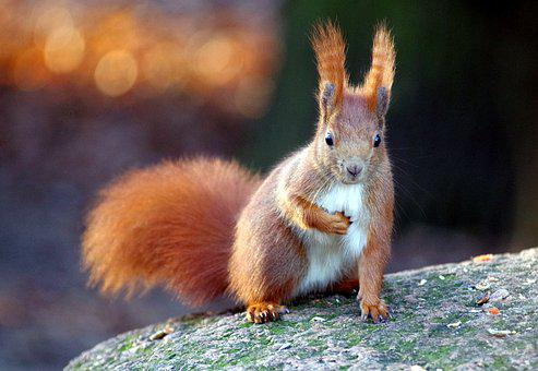 Squirrel, Fur, Nager, Climb, Animal World, Furry