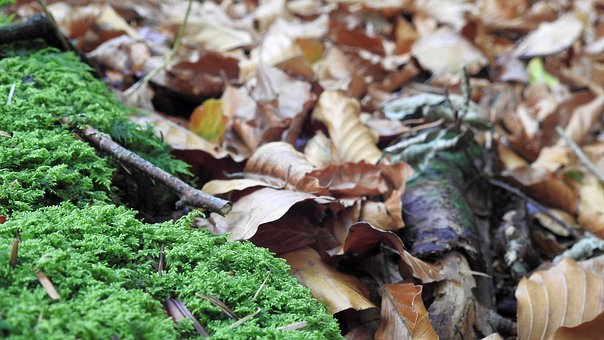 Leaves, Forest, Moss, Nature, Landscape, Green