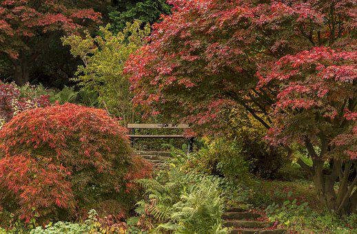Autumn, Indian Summer, Trees, Maple, Red, Nature