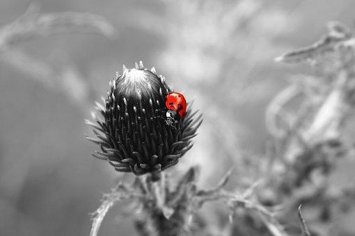 Ladybug, Ladybird, Select Color, Color, Beetle