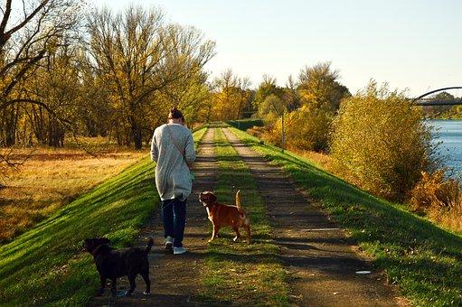 Walk, Human, Person, Woman, Dogs, Landscape, Nature