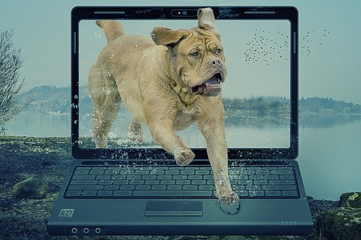 Fantasy, Pop Out, Dog, Laptop, Landscape, Water