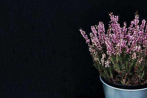 Lavender, Plants, Decor, Decorative, Nature, Leaves