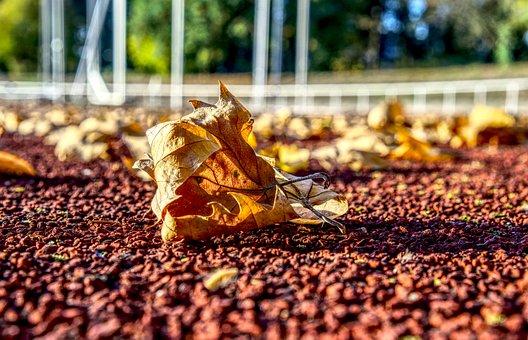 Leaves, Autumn, Leaf, Macro, Close Up, Sports Ground