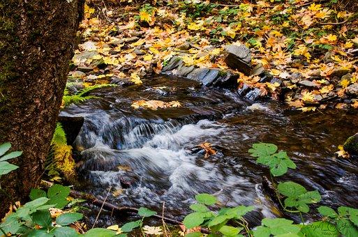Creek, Stream, Water, Nature, Scenic, Landscape