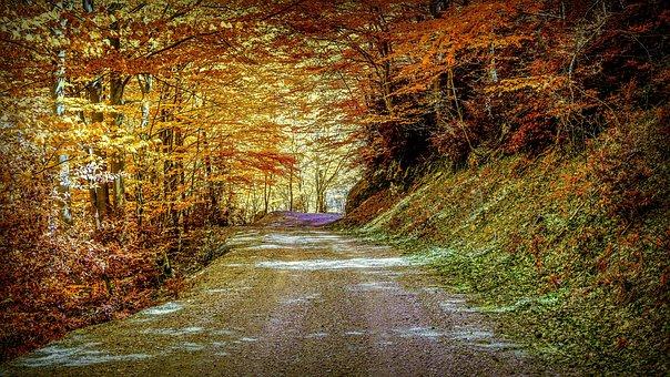 Autumn, Path, Landscape, Forest, Trees, Nature, Trail