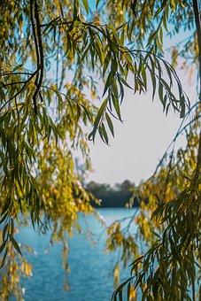 Pasture, Lake, Nature, Landscape, Water, Summer, Sky