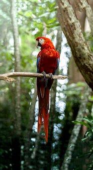 Nature, Bird, Costa Rica, Yellow, Parrot, Raptor
