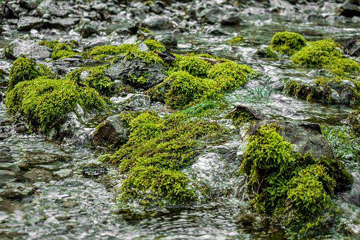 Bach, Moss, Nature, Water, River, Green, Stone, Waters