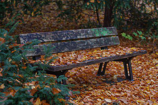 Park Bench, Autumn, Nature, Leaves, Fall Leaves, Sit