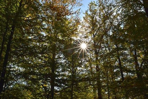 Rays, Sun, Backlighting, Autumn, Nature, Sky, Mood