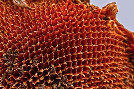 Sunflower, Flower Basket, Dry, Perianth Tube, Honeycomb