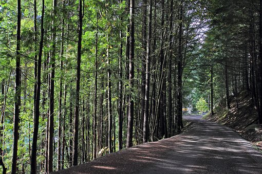 Trees, Trail, Nature