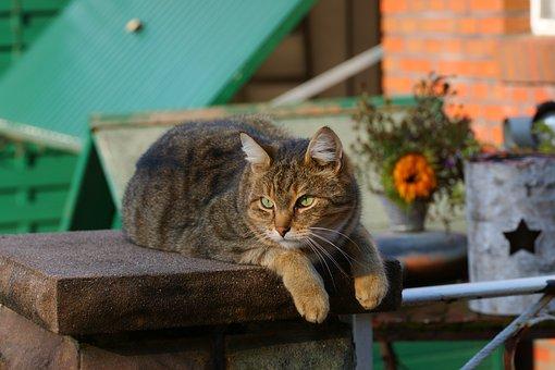 Cat, Female, Late Summer, Nature, Animal World, Pet