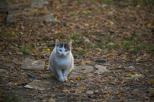 Cat, Autumn Colors, Fall, Autumn, Garden, Looking