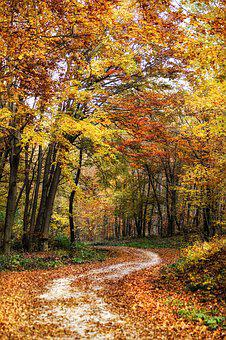 Autumn, Trees, Forest, Nature, Landscape, Mood, Leaves