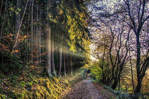 Sun, Rays, Sunset, Forest, Forest Path, Autumn, Leaves