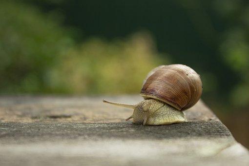 Snail, Creeps, Slow, Slimy, Macro, Slug, Slowly