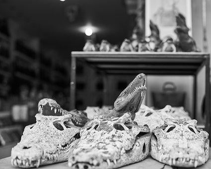Crocodile, Ornament, Gift, Head, Dental, Wild, Goods