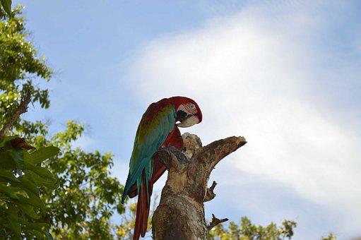 Flag, Macaw, Guacamayas, San Carlos, Eastern Antioquia