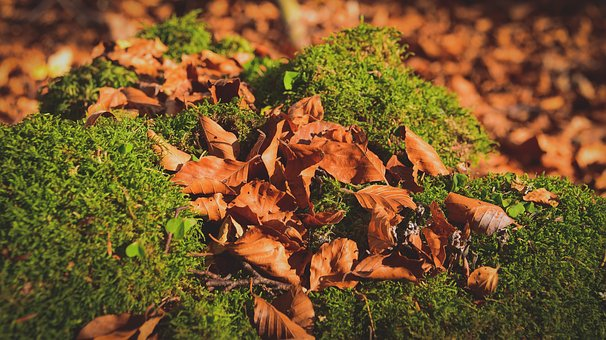 Leaf, Fall, Forest, Green, Brown, Color, Wood, Season