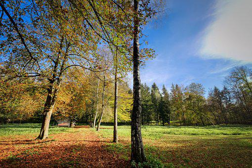 Forest, Glade, Autumn, Leaves, Nature, Trees, Landscape