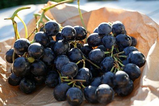 Grape, Grapes, Blue, Fruit, Vine, Grapevine, Food