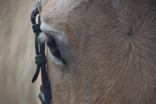 Horse, Eye, Animal, Head, Close Up, Nature, Horse Head