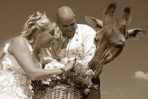 Wedding, Marriage, Bride, Love, Woman, Marry
