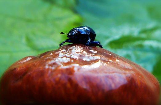 Forest Beetle, The Beetle, Mushroom, Maslak, Autumn
