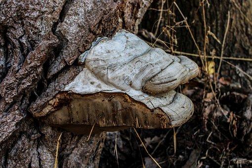 Mushroom, Forest, Nature, Botany, Plant, Parasite