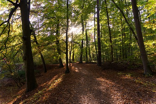 Forest, Tree, Away, Forest Path, Autumn, Leaves, Nature