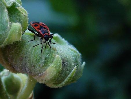 Fire Bug, Garden, Flowers, Nature, Close Up