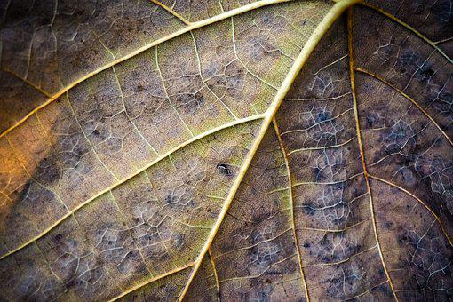 Leaf, Structure, Nature, Pattern, Plant, Mood, Leaves