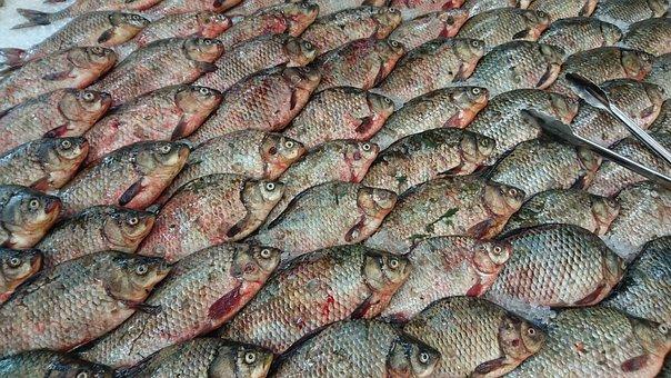 Fish, Carp, Fresh, Nature, Animals, Shop, Ice, Product